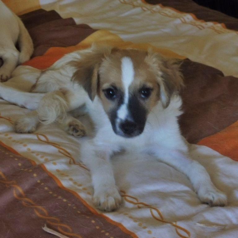 Tanita (1)