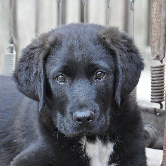 Rudi (6)